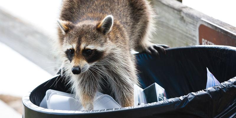South Carolina Wildlife Removal
